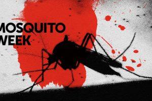 Бил Гейтс: Само за ден комарите убиват повече хора, отколкото акулите за 100 години
