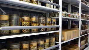 Научни колекции на БАН са признати за част от стратегическата европейска научна инфраструктура