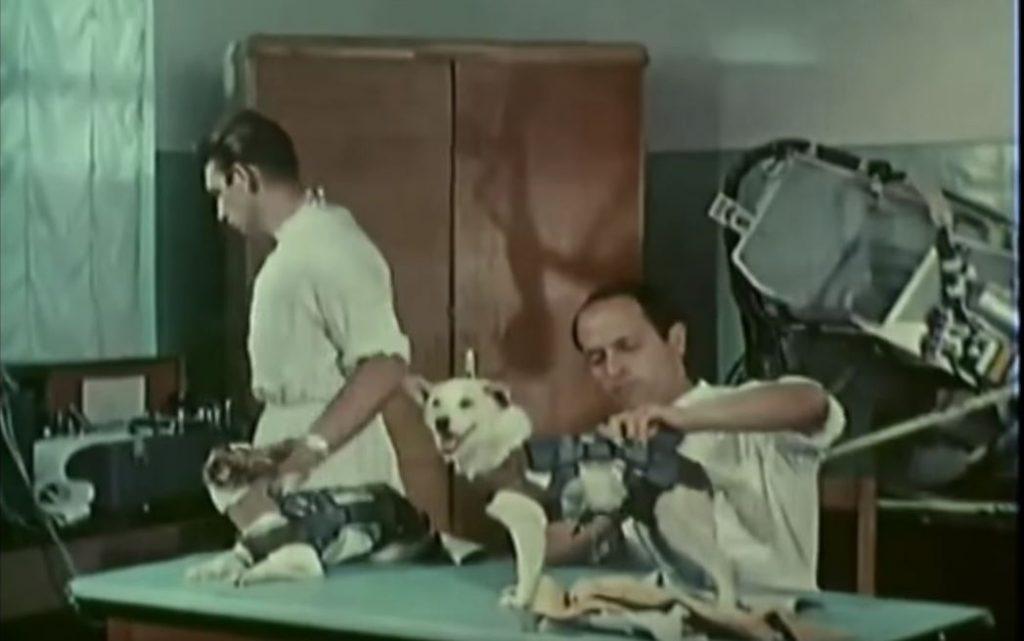 Белка и Стрелка – първите живи същества оцелели при полет в Космоса (видео)