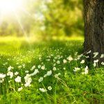 Днес в 23:58 ч. е началото на астрономическата пролет