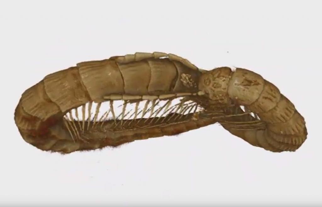 Международен екип ръководен от проф. Павел Стоев описва уникален фосил на 99 млн. години, отрит в кехлибар