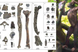 Български учен участва в откриването на нов човешки прародител, променящ представите за човешката еволюция