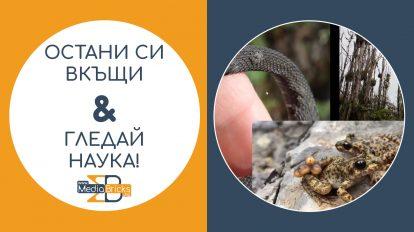 """Остани си вкъщи & гледай наука! (видео) Виолета Желязкова – """"Нови инфекциозни заболявания в дивата природа"""""""
