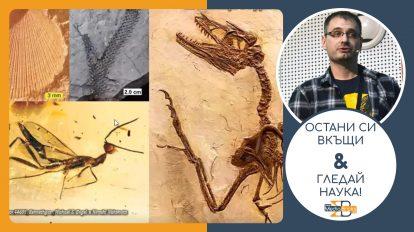"""Остани си вкъщи & гледай наука! (видео) Владимир Николов – """"Масовите измирания - възходи и падения в историята на живота"""""""