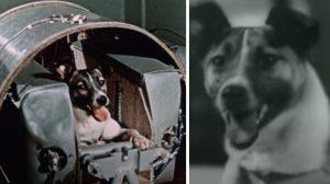 На 3 ноември 1957 г. е изстреляно кучето Лайка – първото живо същество, полетяло в орбита около Земята (видео)