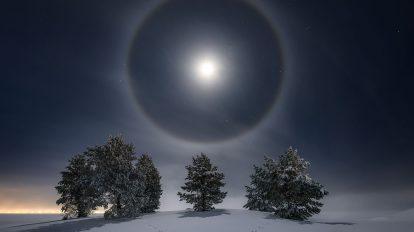 Лунно хало над заснежени дървета (Астрономическа снимка на деня – APOD)
