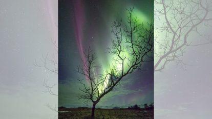 Сияещото дърво (Астрономическа снимка на деня – APOD)
