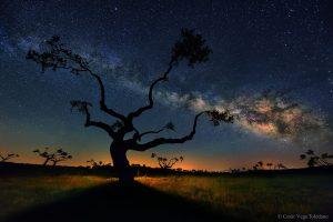 Дървото галактика (Астрономическа снимка на деня – APOD)